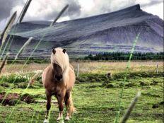 pony-2
