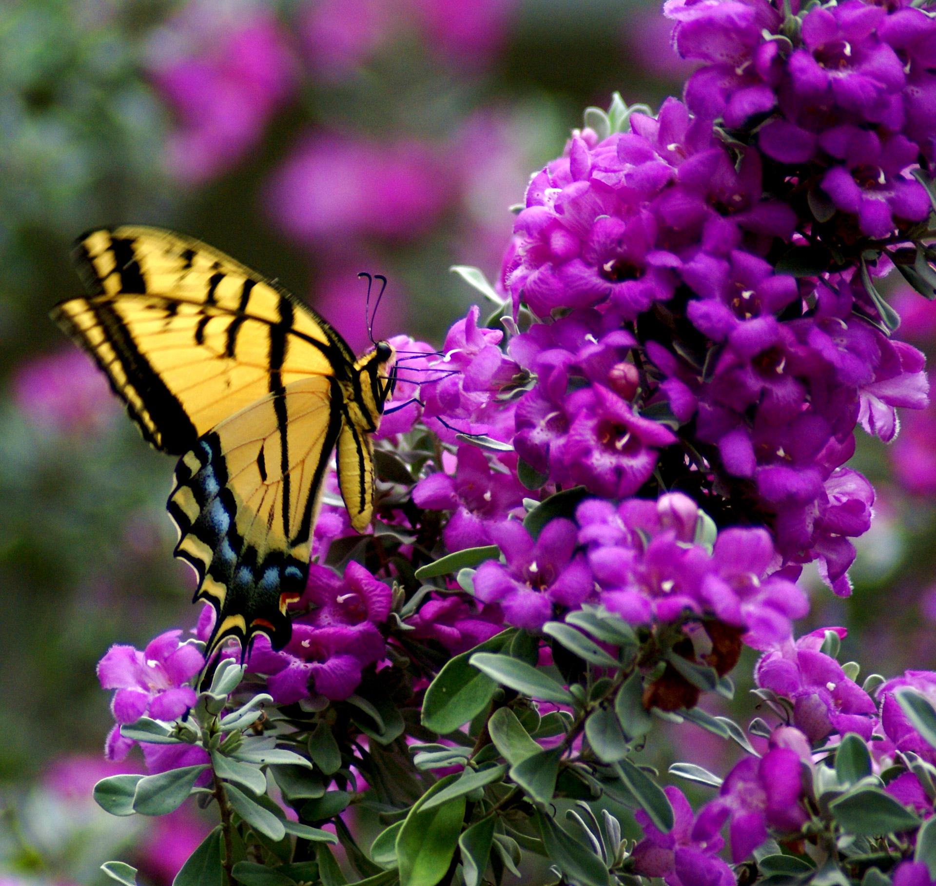 butterfly-on-flower-1352413069NbX