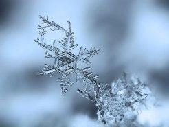 snowflake detailed