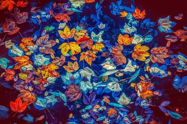 Autumn leaves on blue pond